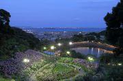 紫陽花と三河湾の夜景