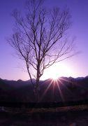 樹木と日の出