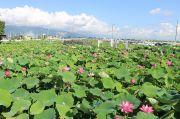 森川花はす田の全景