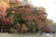 愛知森林公園