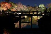 くすのき橋とライトアップ紅葉
