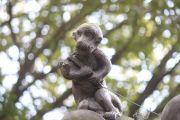 猿の神像2
