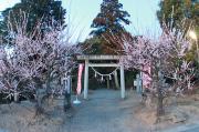 菅原神社の鳥居と梅