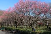 岐阜市梅林公園