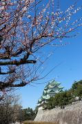名古屋城と梅