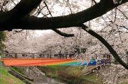 虹色の橋と桜