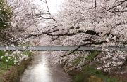 黒川・御用水跡街園