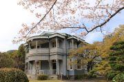 西郷從道邸と桜