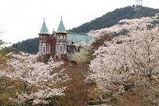 聖ヨハネ教会堂と桜