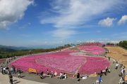 天空花回廊「芝桜の丘」