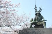 本田忠勝の銅像と桜