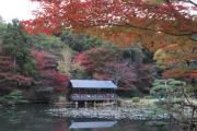 奥池と紅葉