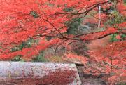 屋根に落ちた紅葉