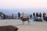 若草山山頂の鹿