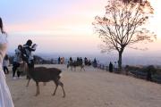 若草山山頂を歩く鹿