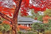 森鴎外・夏目漱石住宅と紅葉
