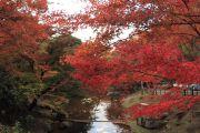 川に映る紅葉の赤