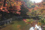 緑から赤色の紅葉