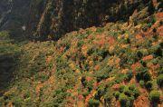 ロープウェイから見下ろした紅葉の風景