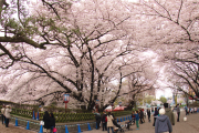 正門周辺・桜がきれいな場所
