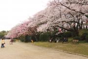 桜がきれいな場所
