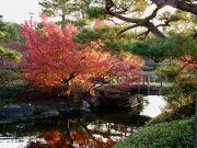 池に映る紅葉と小さな橋