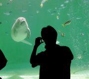 ジュゴンを撮影する人