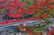 香嵐渓の楓と赤色の橋