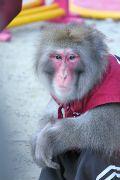 大道芸人の猿