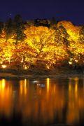 川に映ったライトアップされた楓