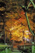 階段と紅葉のライトアップ