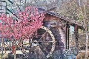 水車小屋と桃の木