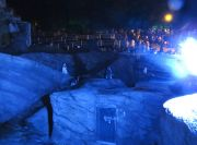 ライトアップされたペンギンと観客