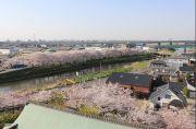 清州城天守閣からの風景
