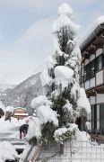 樹木に積もった雪と氷柱