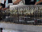 栃波市庄川産の鮎の塩焼き