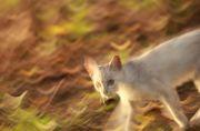 公園内で見かけた白猫