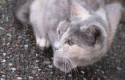 公園内で見かけた野良猫